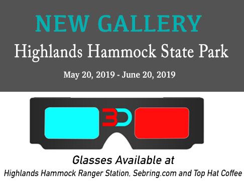 Highlands Hammock 3D - 3d_glasses_display_HH_3.jpg